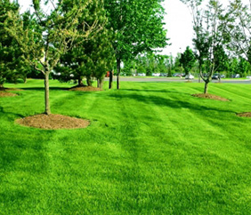 Commercial Grounds Maintenance in SE Michigan - Executive Property Maintenance - trees